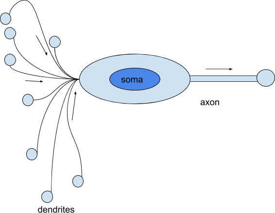 analogy-between-a-perceptron-and-a-neuron