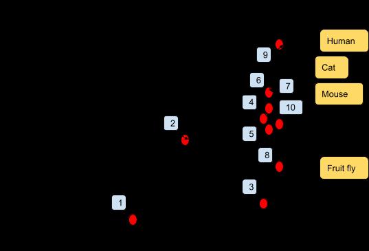 Connection Per Neurons