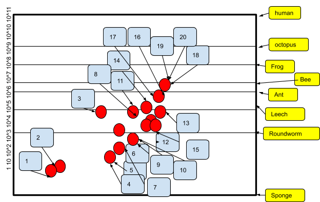 Increase of Neural Network Size